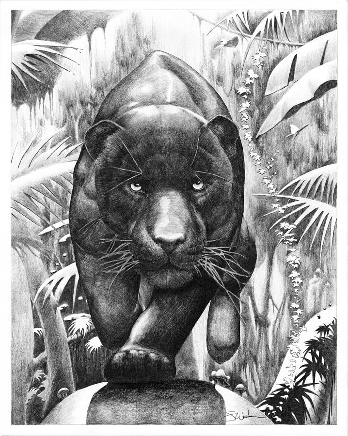 drawing of a black panther bischu the black panther drawing by steve wedan panther black drawing of a
