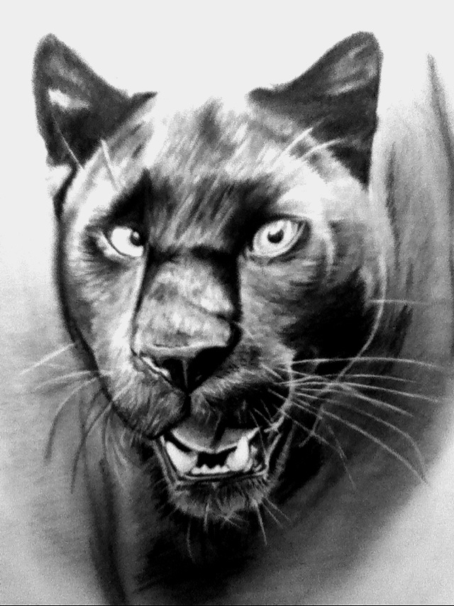 drawing of a black panther black panther animal by moemanreese on deviantart black panther drawing of a