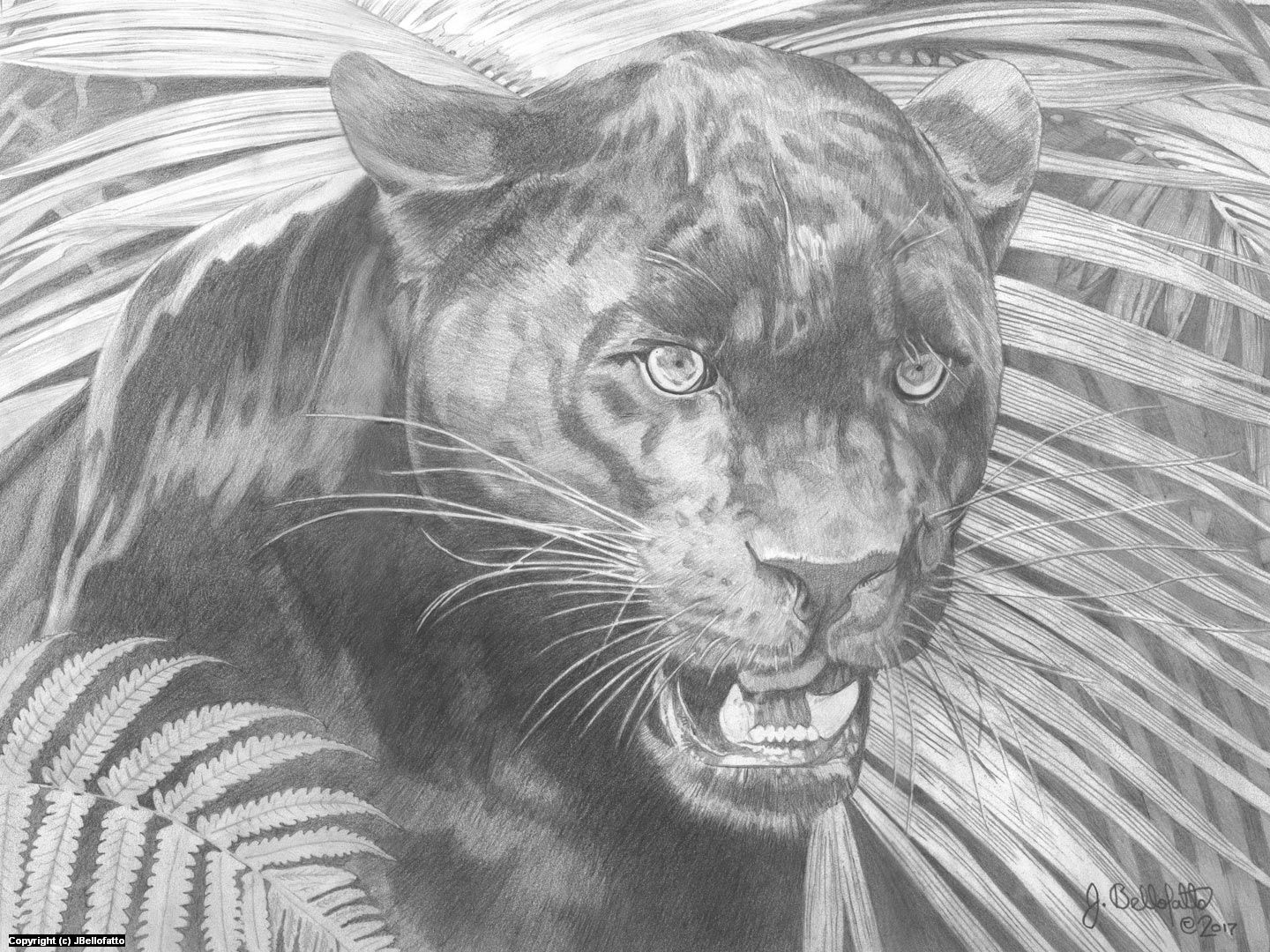 drawing of a black panther black panther artwork by joseph bellofatto c2017 black drawing of a panther