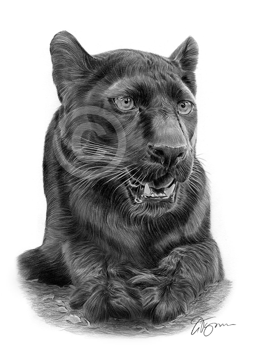 drawing of a black panther pencil drawing of a young black panther by uk artist gary drawing panther a black of