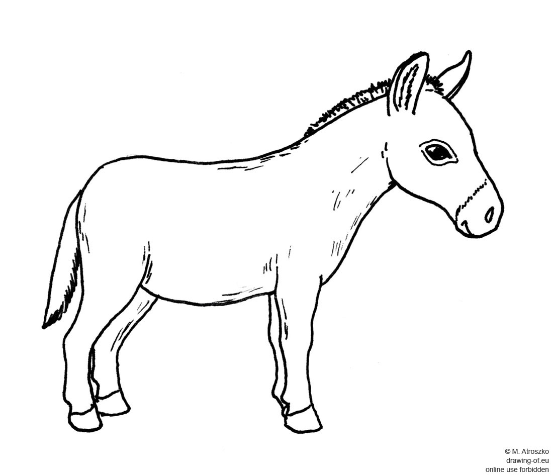 drawing of a donkey donkey cartoon drawing in 4 steps with photoshop a donkey drawing of