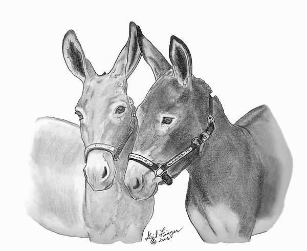 drawing of a donkey donkey clipart draw cartoon donkey draw cartoon drawing a of donkey
