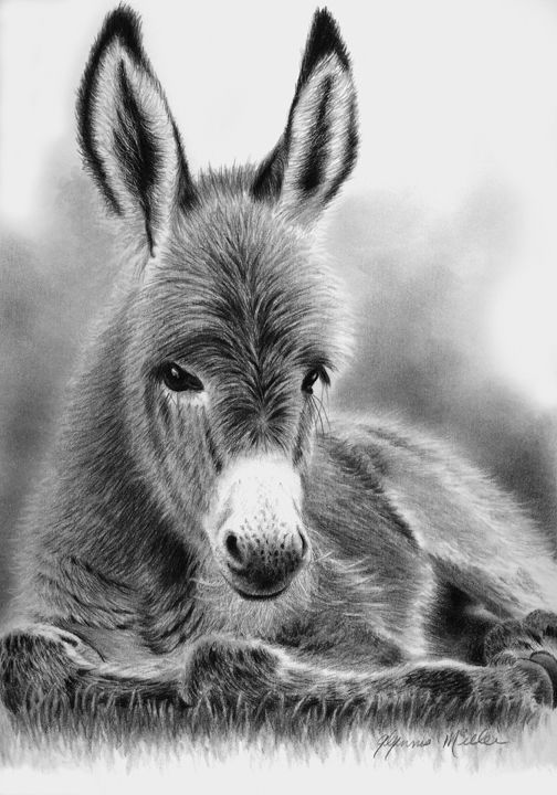 drawing of a donkey donkey drawing charcoal nursery art print farm donkey drawing a donkey of