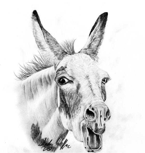 drawing of a donkey donkey line drawing at getdrawings free download of a donkey drawing