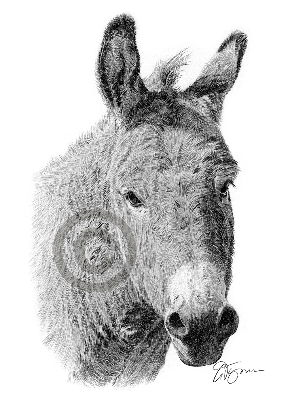 drawing of a donkey donkey pencil drawing how to sketch donkey using pencils drawing donkey a of