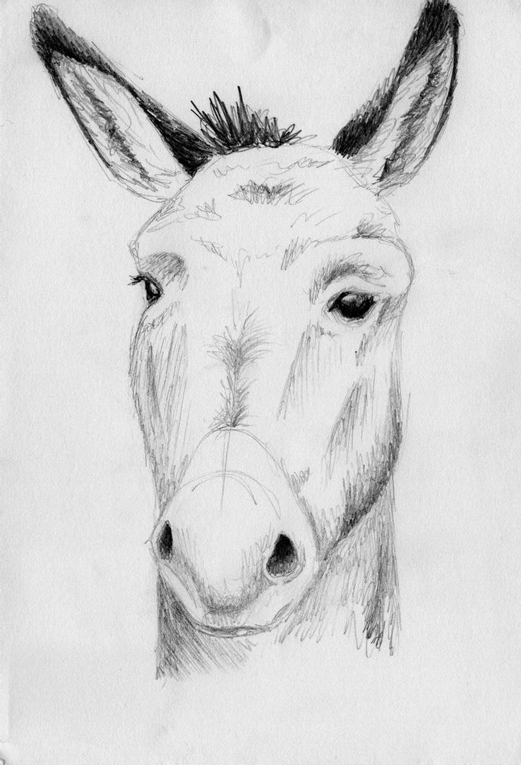 drawing of a donkey drawing of donkey drawing ofeu drawing a donkey of