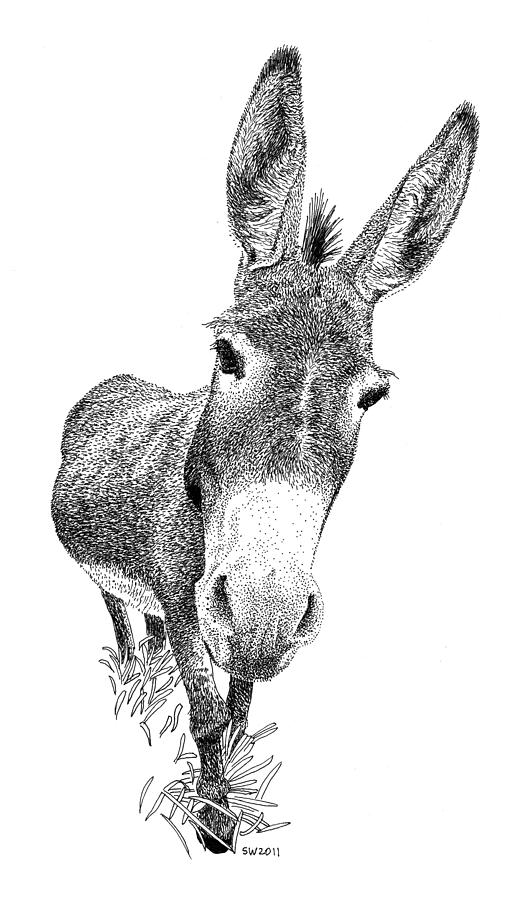 drawing of a donkey pencil drawing of a donkey by uk artist gary tymon of a donkey drawing