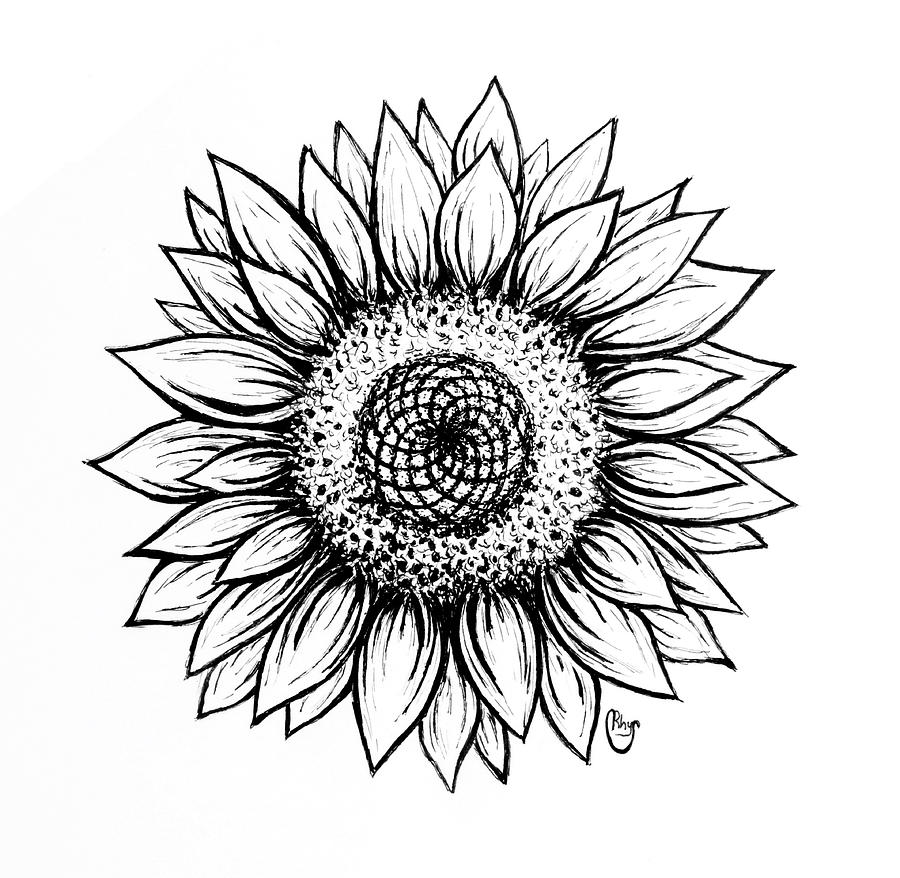 drawing of a sunflower a sunflowers beauty drawing by patricia hiltz sunflower drawing a of