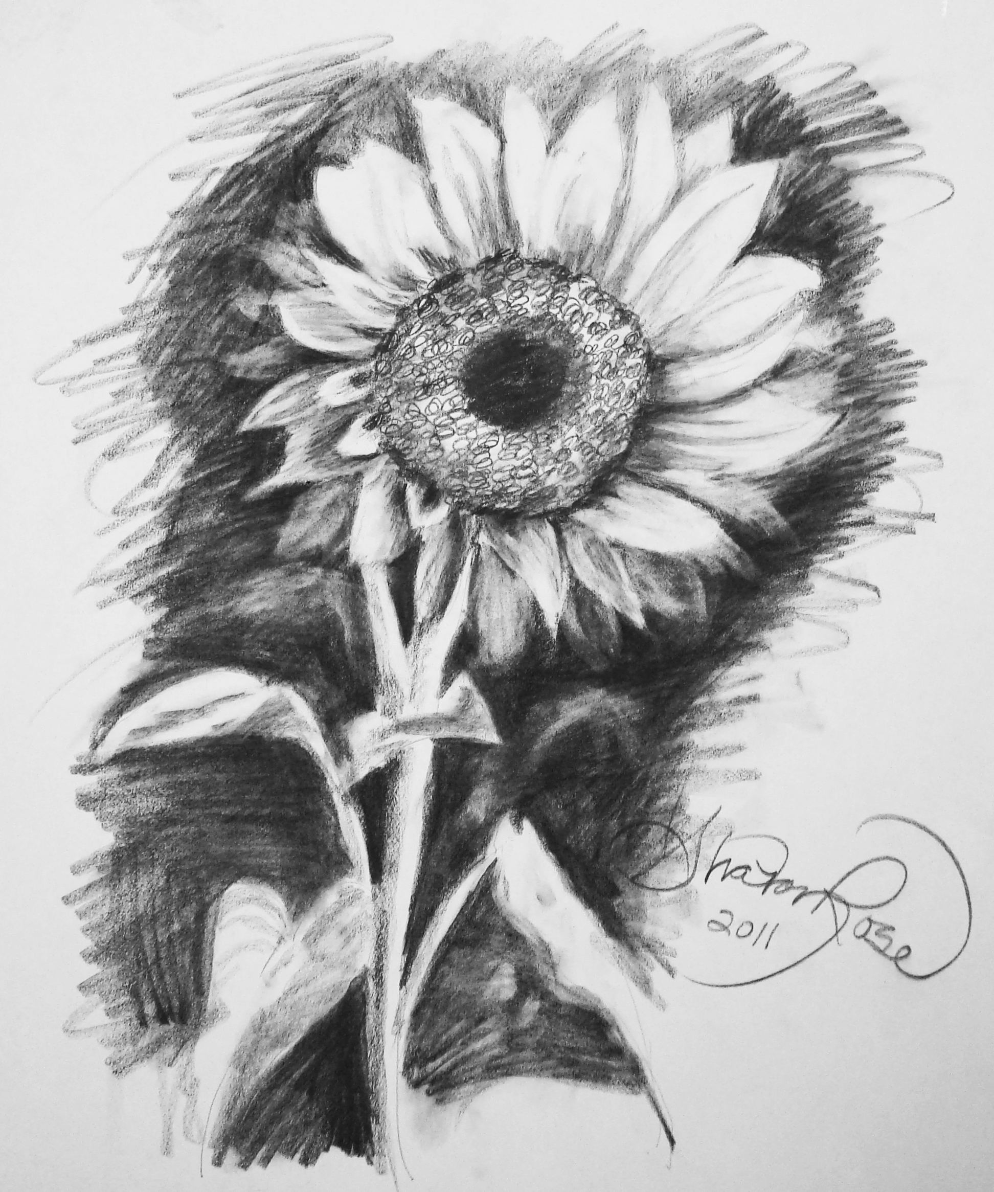 drawing of a sunflower free 10 sunflower drawings in ai a sunflower drawing of