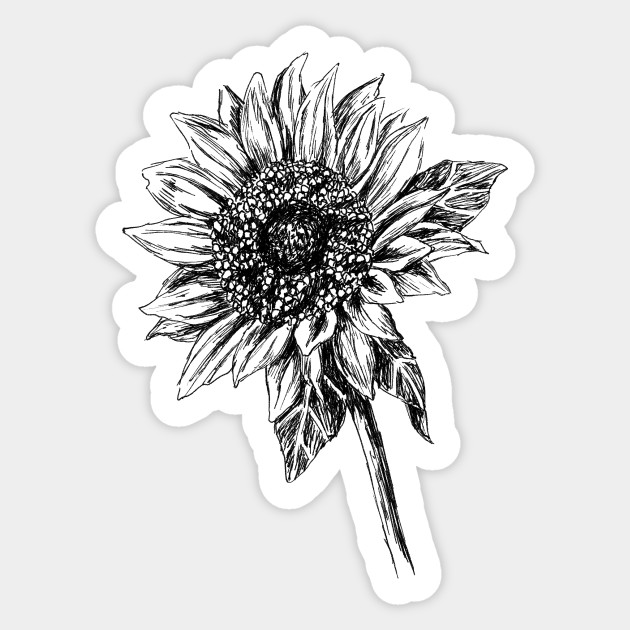 drawing of a sunflower line drawing sunflower at getdrawings free download drawing sunflower a of