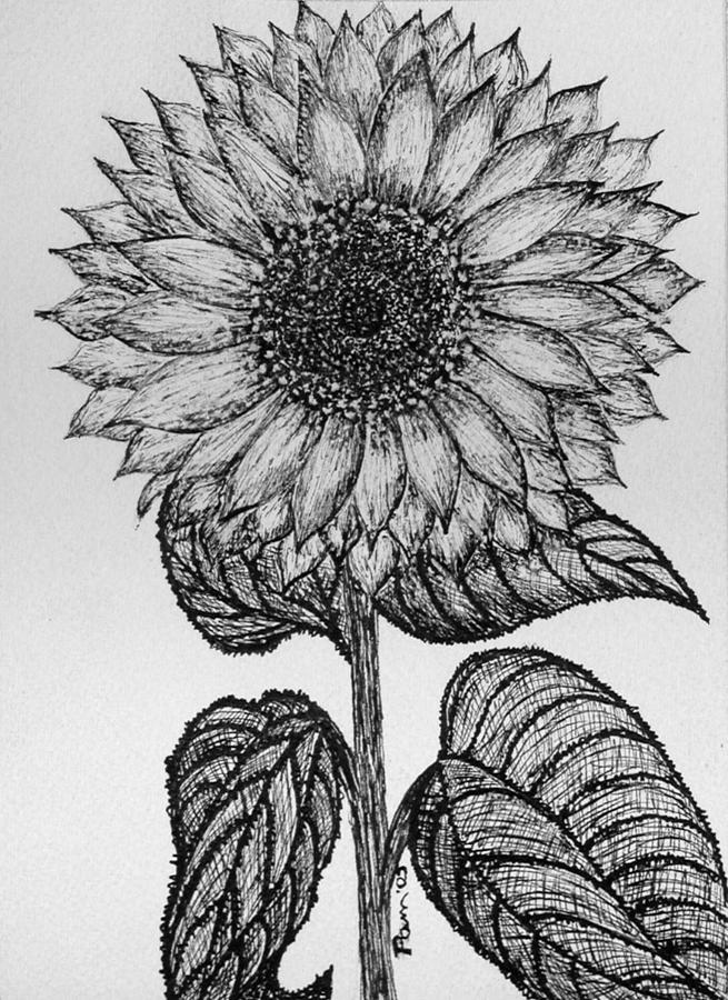 drawing of a sunflower simple sunflower drawing at getdrawings free download drawing of a sunflower