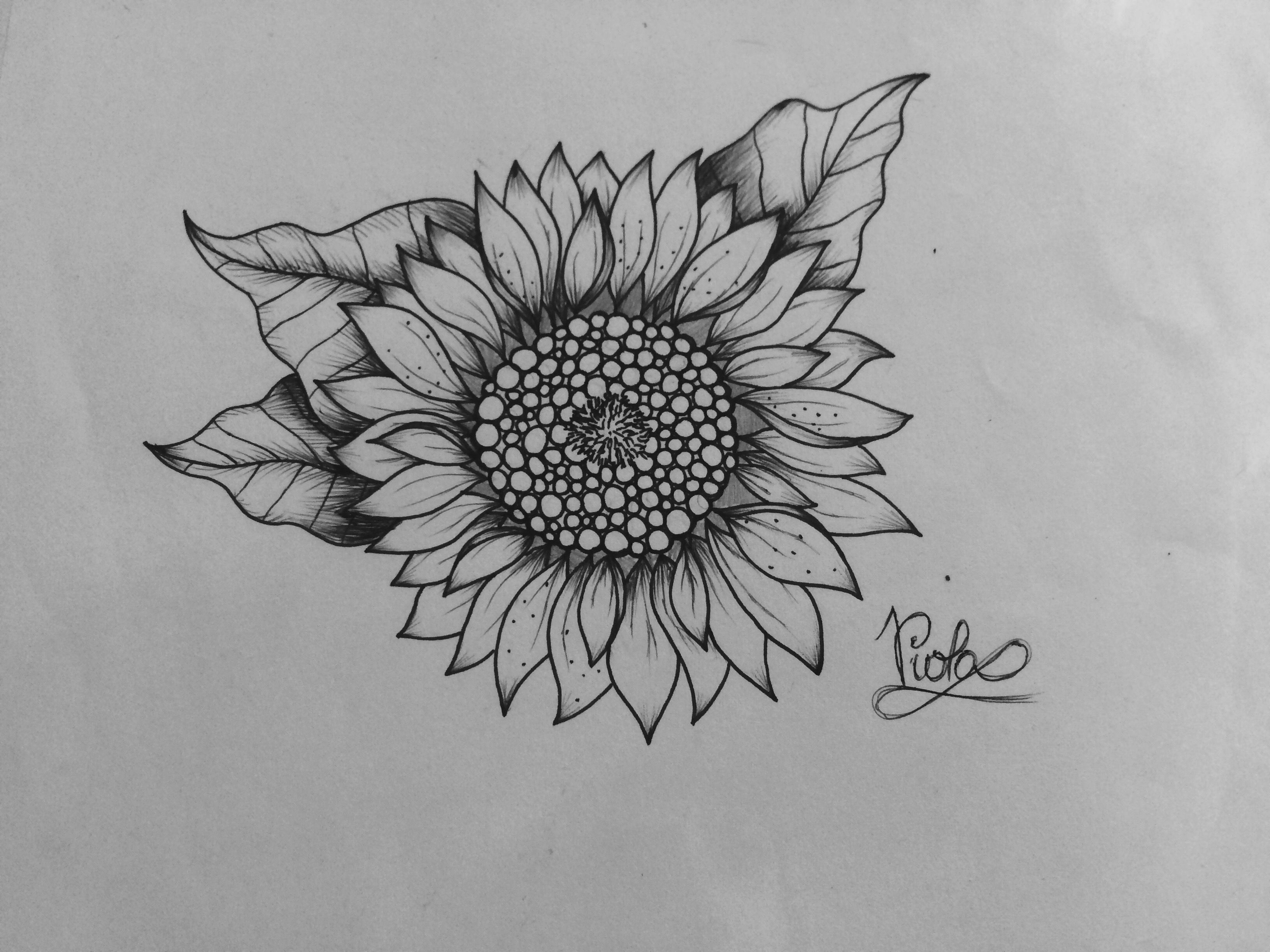drawing of a sunflower sunflower clipart instant download pen ink of sunflower a drawing