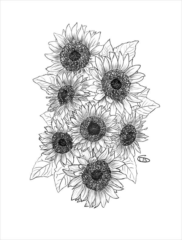 drawing of a sunflower sunflower drawing by bari rhys drawing a of sunflower