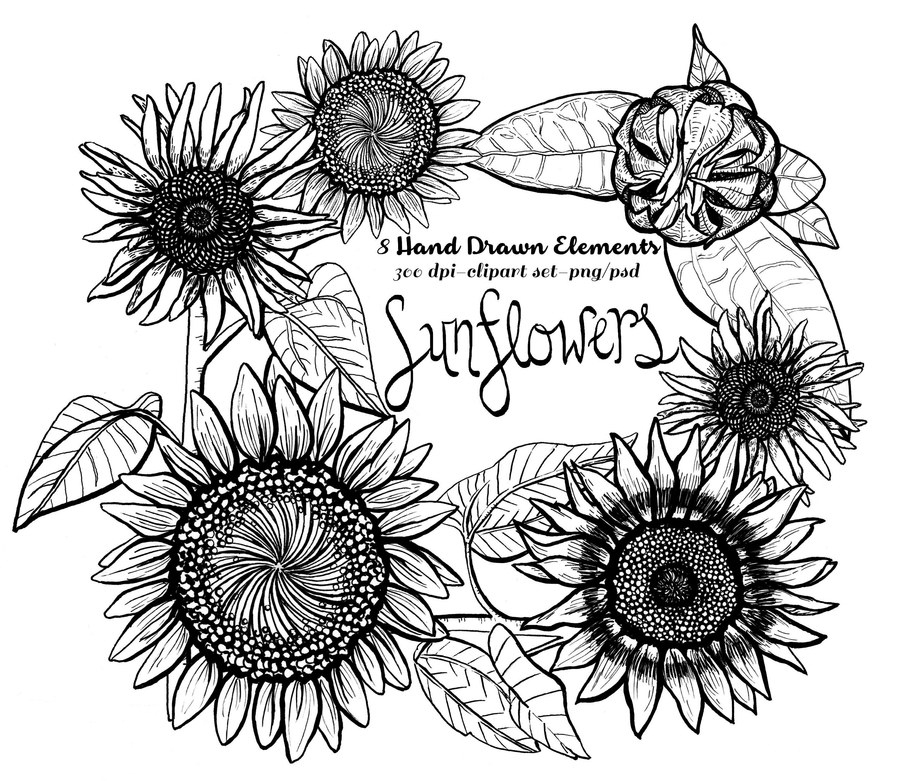drawing of a sunflower sunflower drawing by brandi bruggman a sunflower of drawing