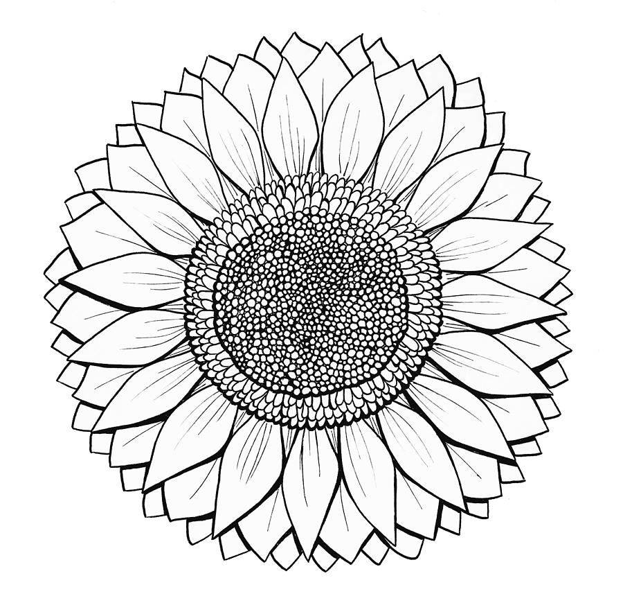drawing of a sunflower sunflower drawing sunflower sticker teepublic of a drawing sunflower