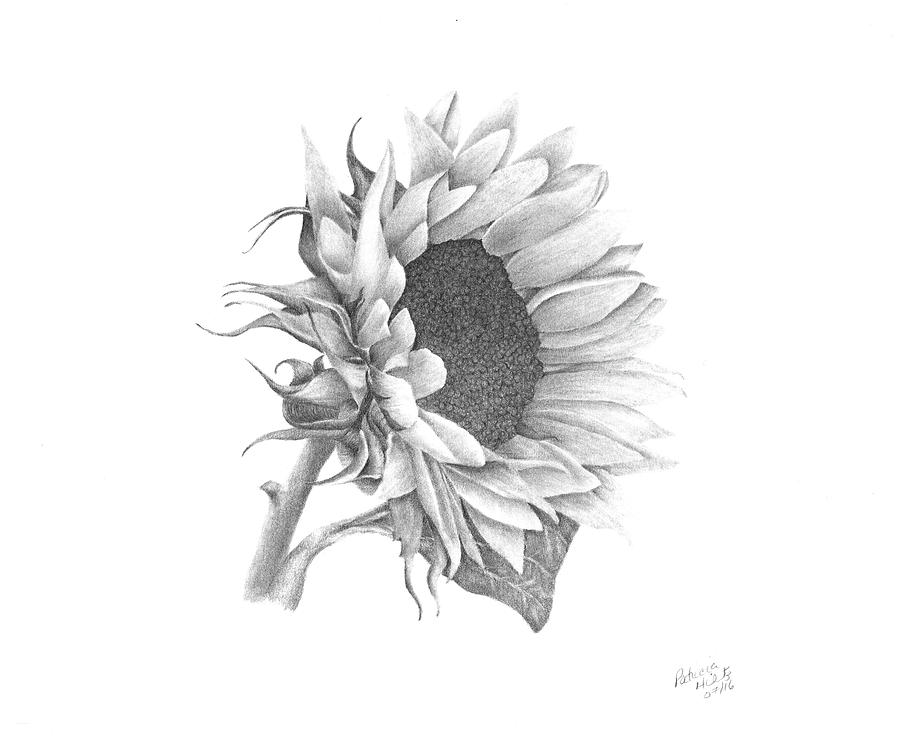 drawing of a sunflower sunflower line drawing etsy sunflower a of drawing