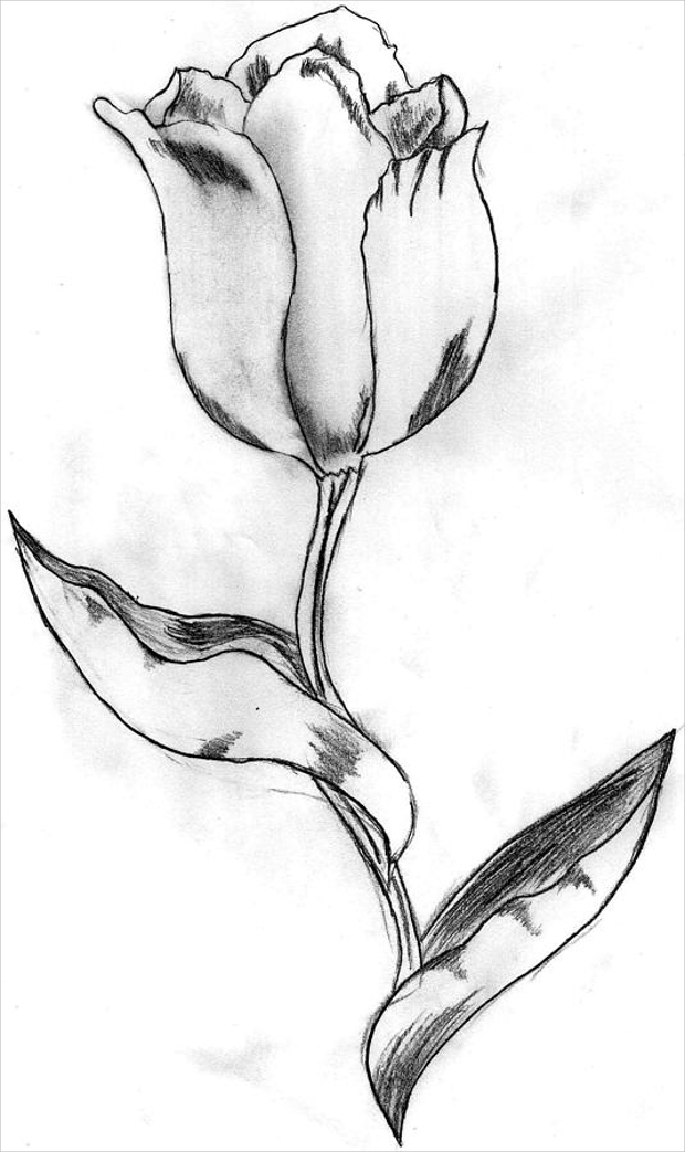 drawings of tulips seamless pattern hand drawn tulip flower and leaves tulips drawings of