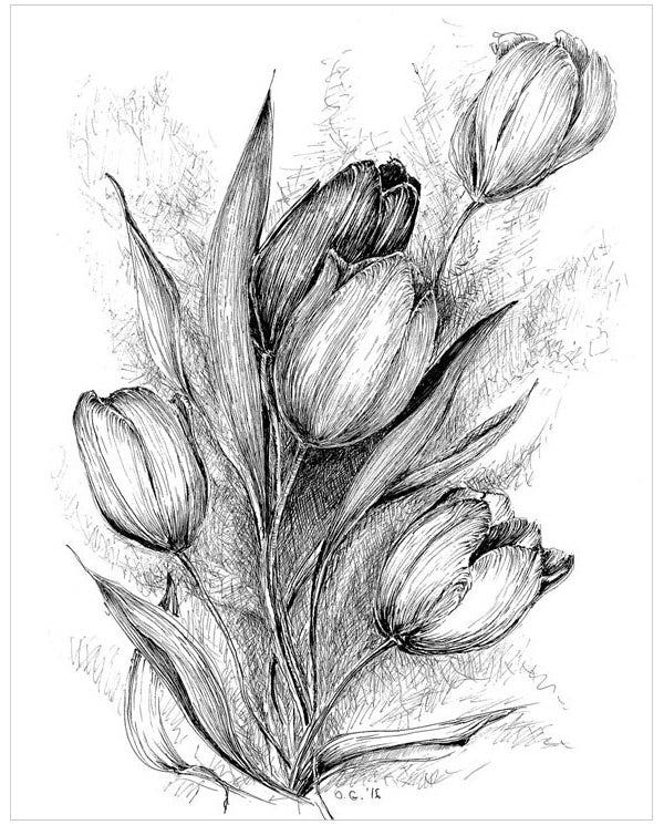 drawings of tulips tulip drawings clipart best tulips of drawings