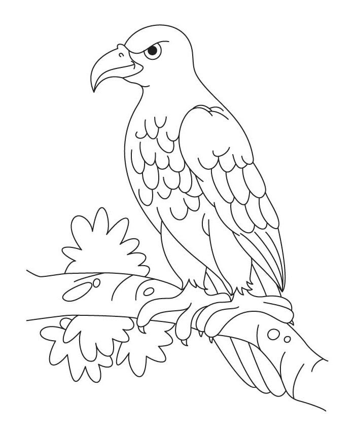 eagle colouring 21 best eagle coloring pages images on pinterest eagles eagle colouring