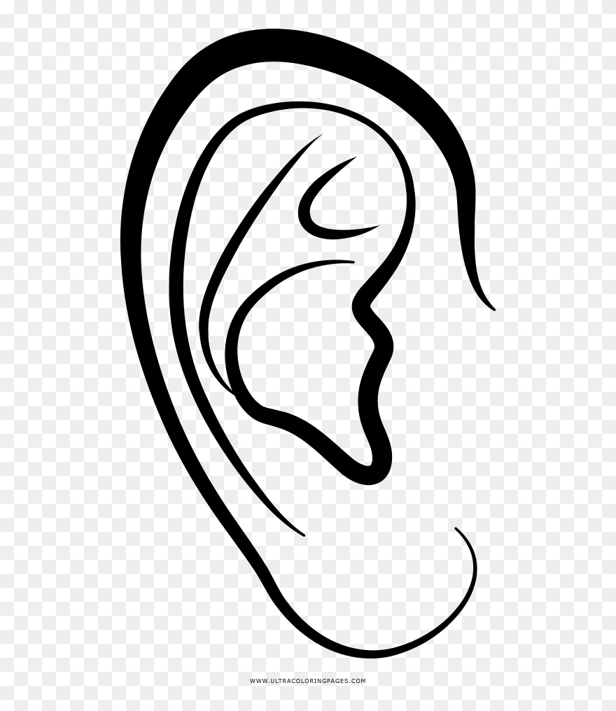 ear coloring clipart ear coloring ear coloring png download ear coloring