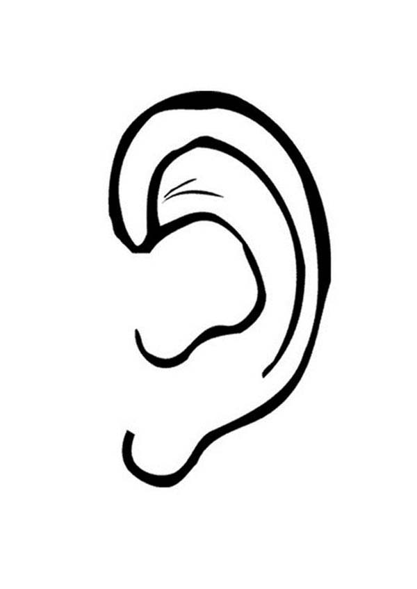 ear coloring ears coloring pages coloring home coloring ear 1 2