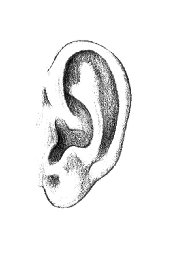 ear coloring ears coloring pages coloring home ear coloring