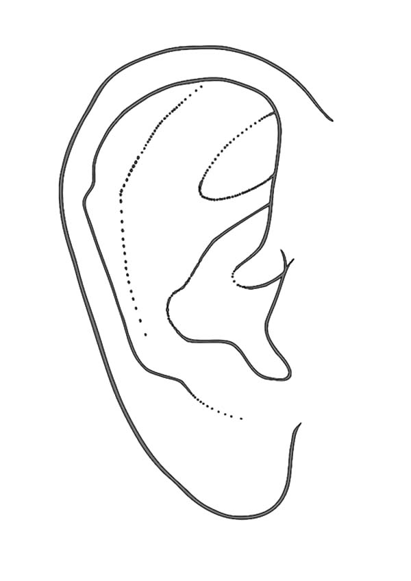 ear coloring human ear coloring pages kids play color ear coloring