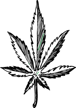 easy pot leaf drawing easy pot leaf drawing free download on clipartmag leaf pot easy drawing