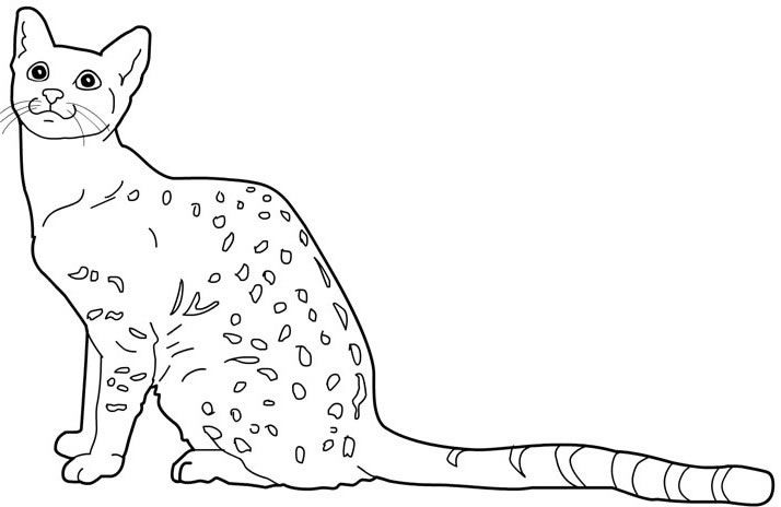 egyptian cat coloring page ancient egyptian cat coloring pages egyptian cats zoo cat coloring page egyptian