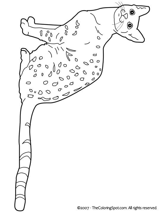 egyptian cat coloring page egyptian cat coloring pages at getdrawings free download coloring cat page egyptian