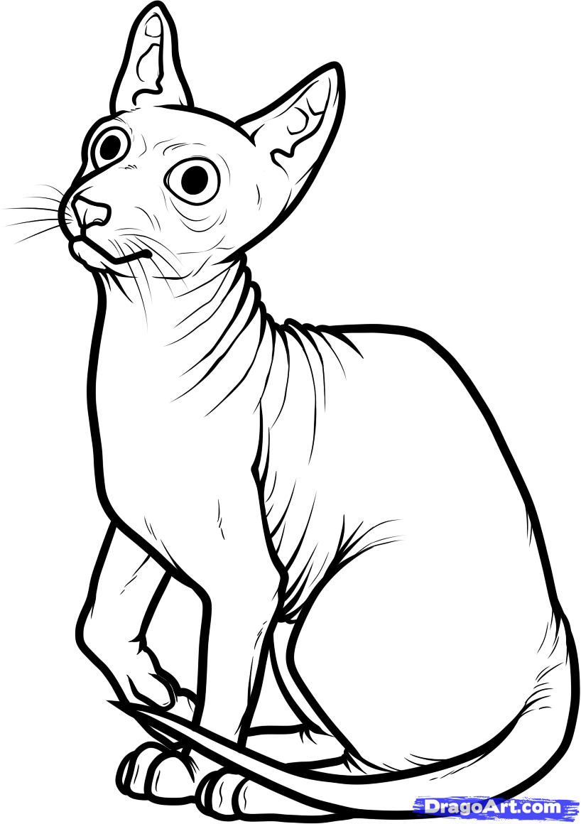 egyptian cat coloring page egyptiancat cats coloring pages for teens and adults cat egyptian coloring page