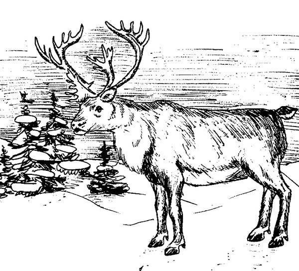 elk coloring pages elk coloring pages pages elk coloring 1 1