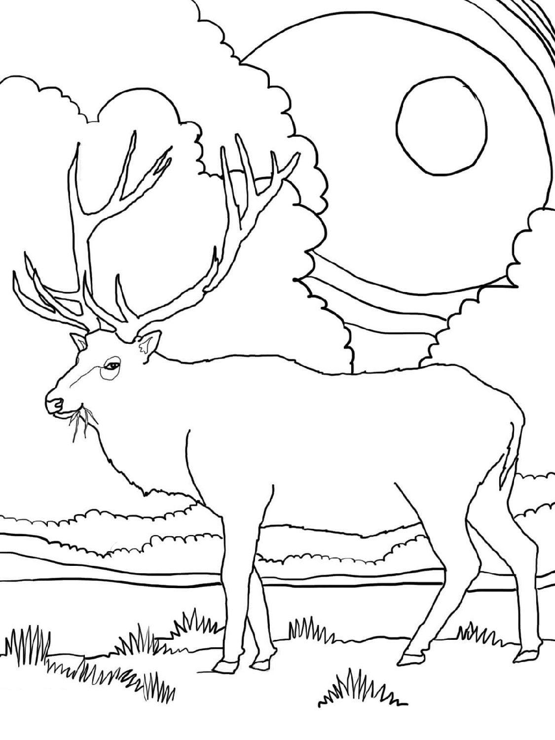 elk pictures to color bull elk coloring pages download and print for free pictures color to elk