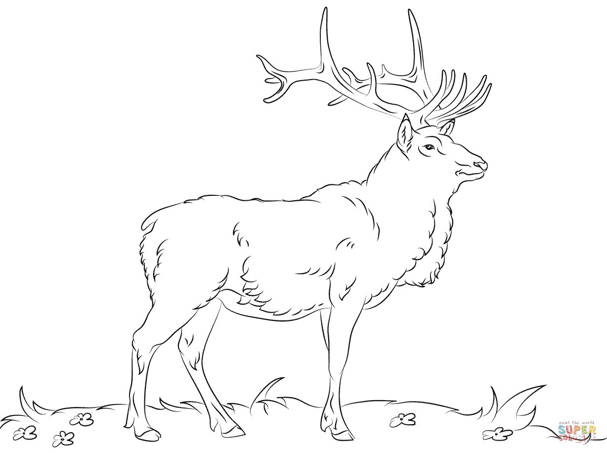 elk pictures to color coloring k5 worksheets part 3 to pictures color elk