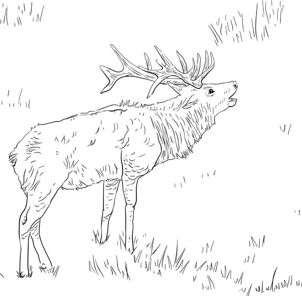 elk pictures to color elk coloring pages color elk pictures to