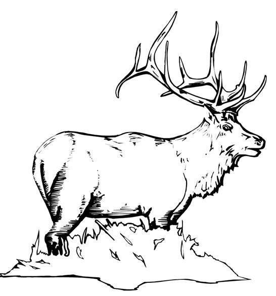 elk pictures to color elk pictures to color pictures color to elk