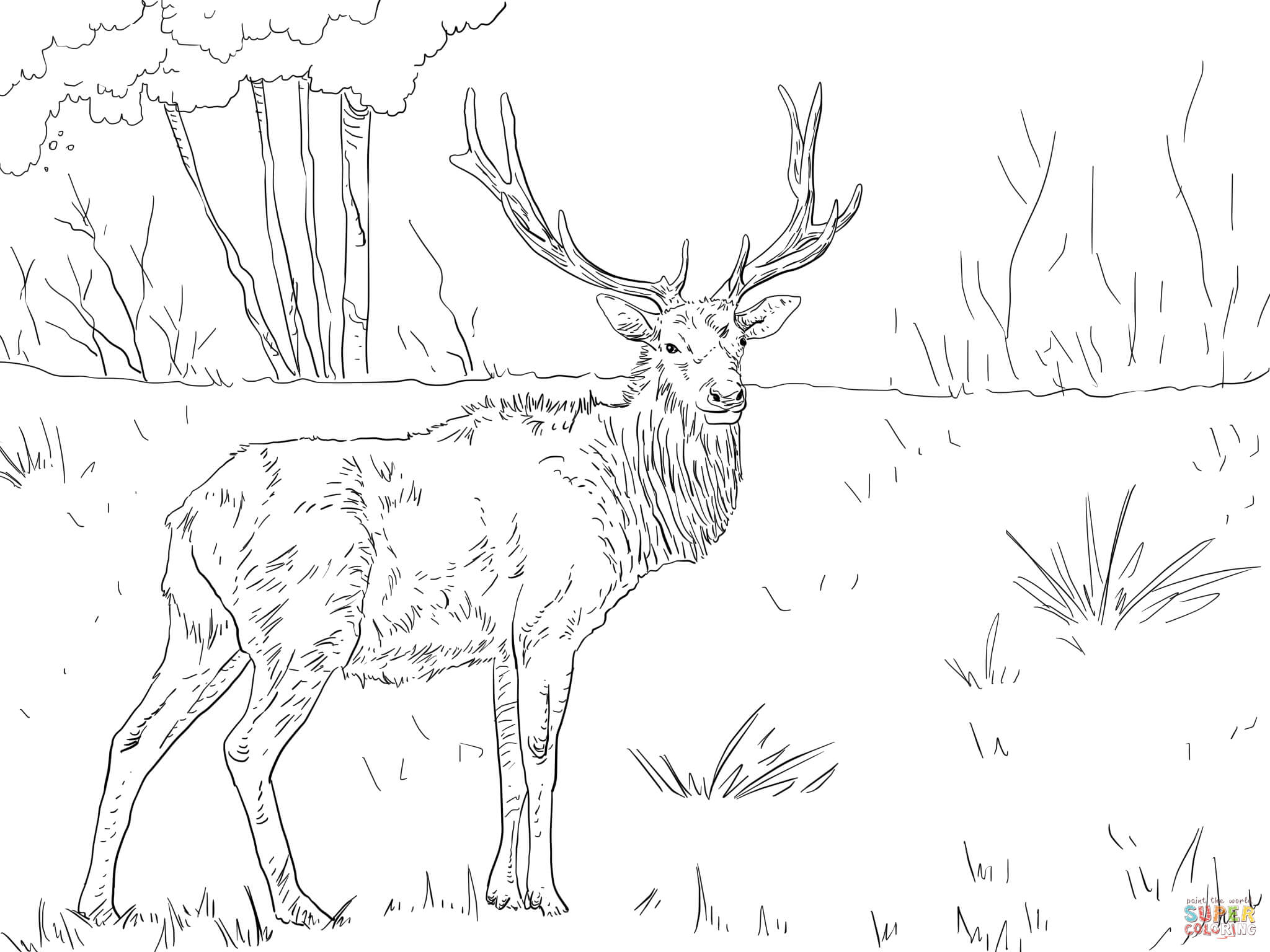 elk pictures to color free animal coloring pages elk thru mouse animal elk pictures color to