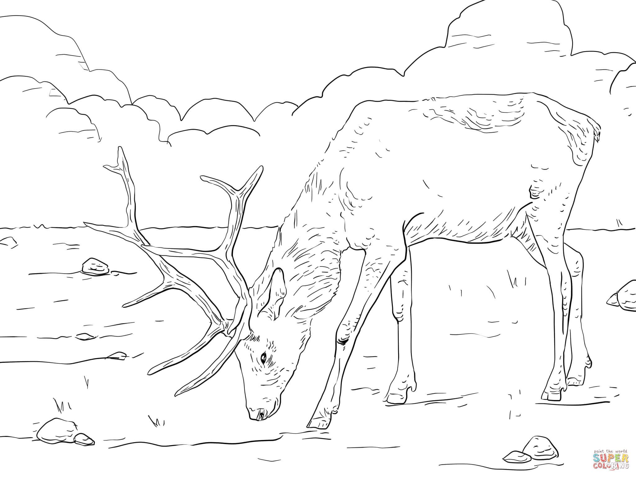elk pictures to color how to draw an elk coloring pages download print elk color to pictures