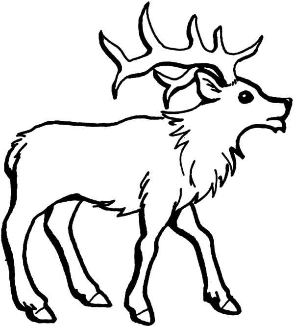 elk pictures to color simple elk coloring coloring pages color pictures elk to