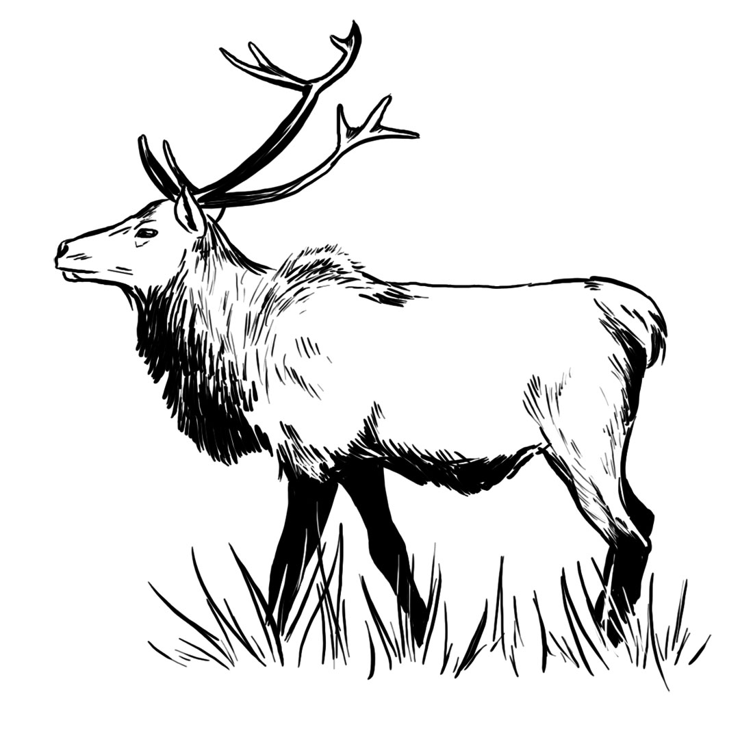 elk pictures to color simple elk coloring pages pictures to color elk