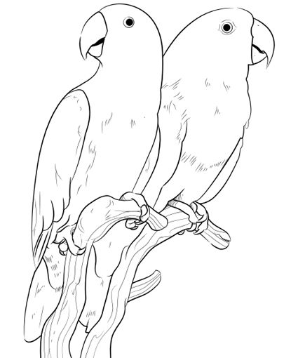 exotic animal coloring pages 790 best animal coloring pages for adults images on pages animal exotic coloring