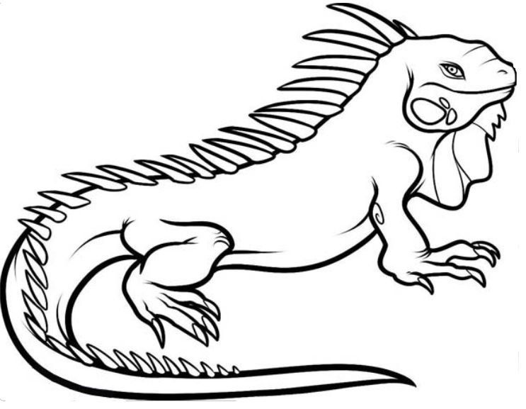 exotic animal coloring pages exotic animals adult coloring book designs myria exotic coloring animal pages