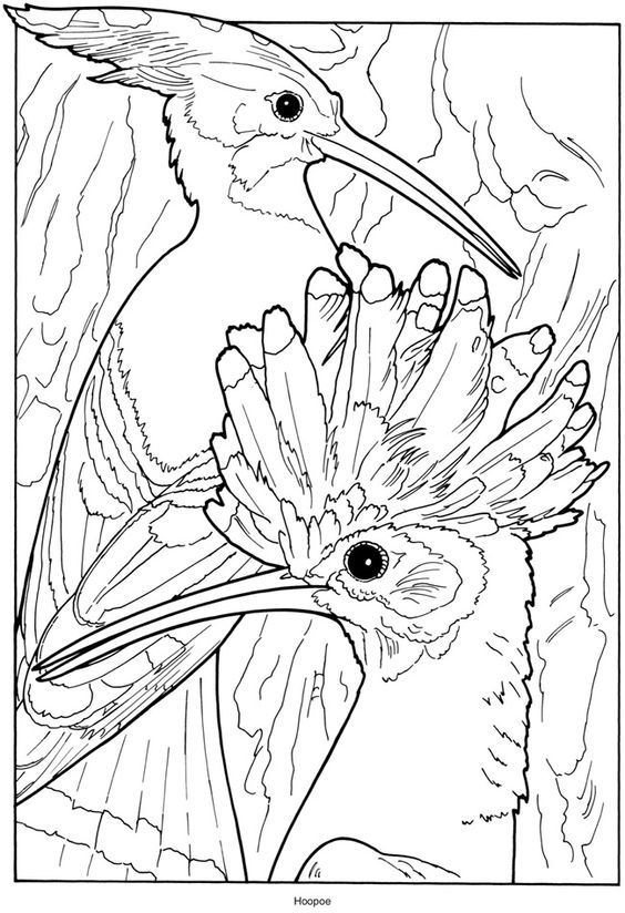 exotic animal coloring pages exotic species of animals on coloring page for kids coloring animal pages exotic