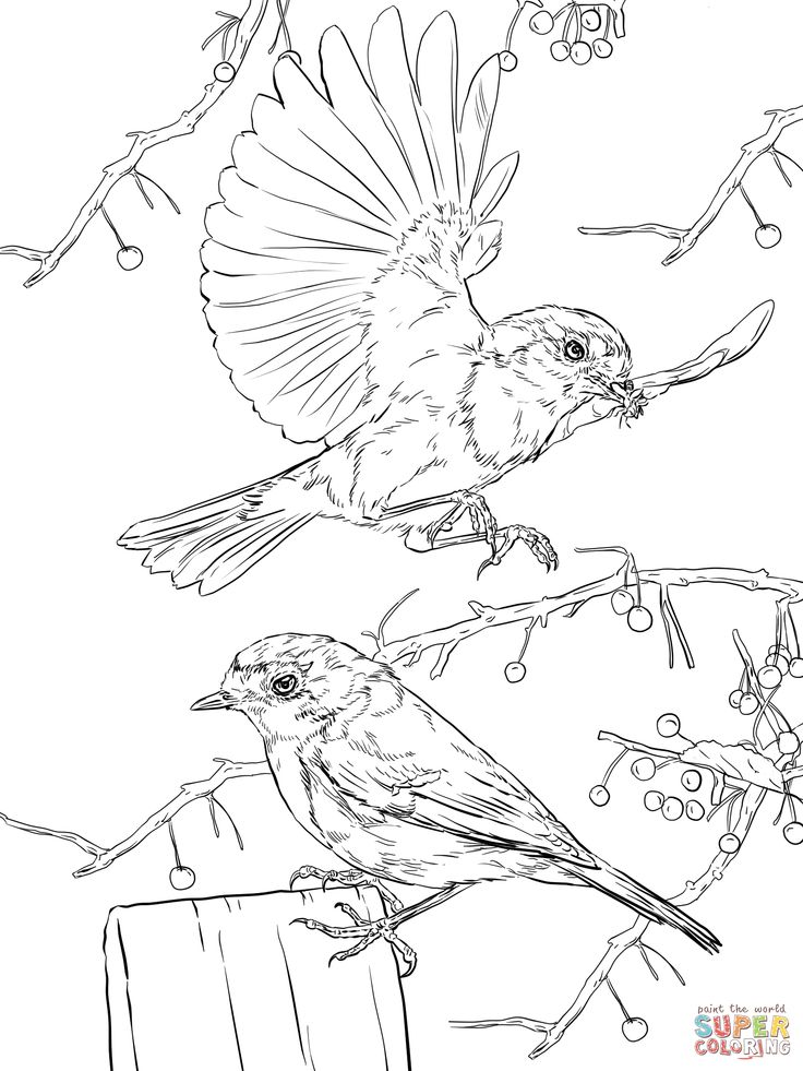 exotic animal coloring pages pin on colouring art coloring animal pages exotic