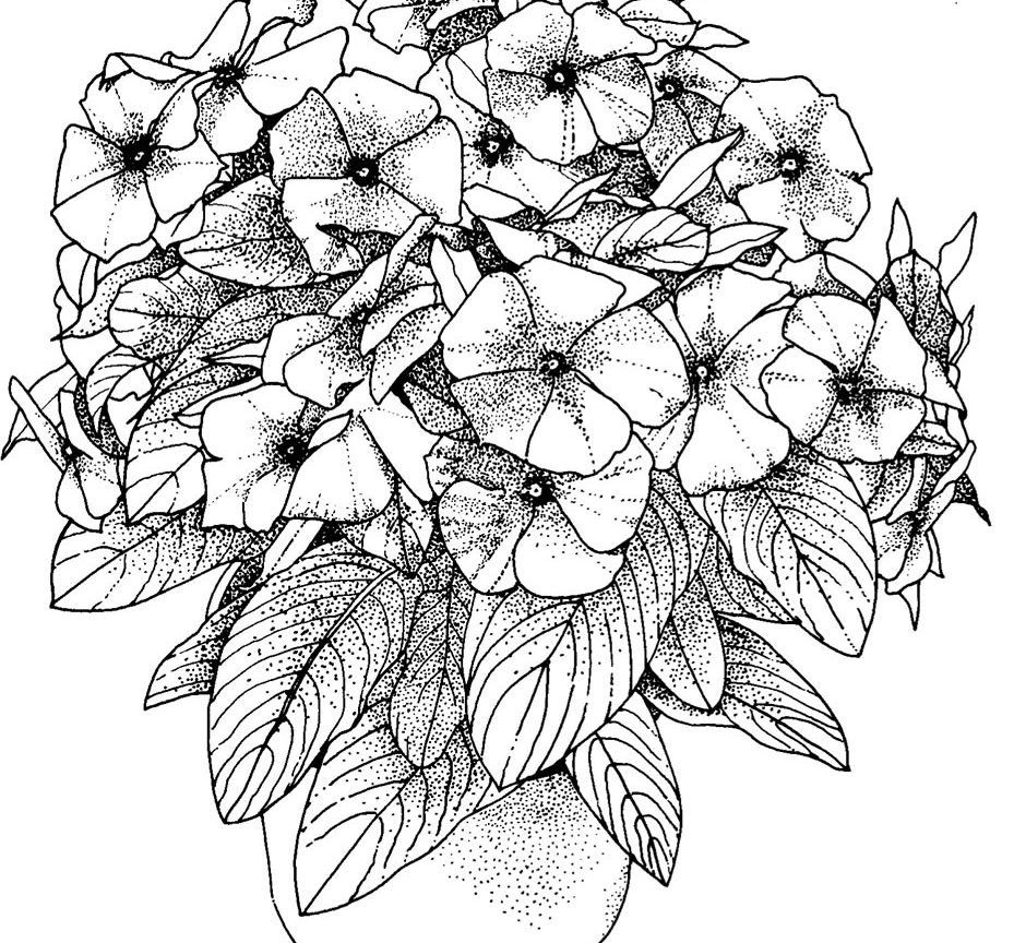 extreme coloring pages the best free extreme coloring page images download from coloring extreme pages