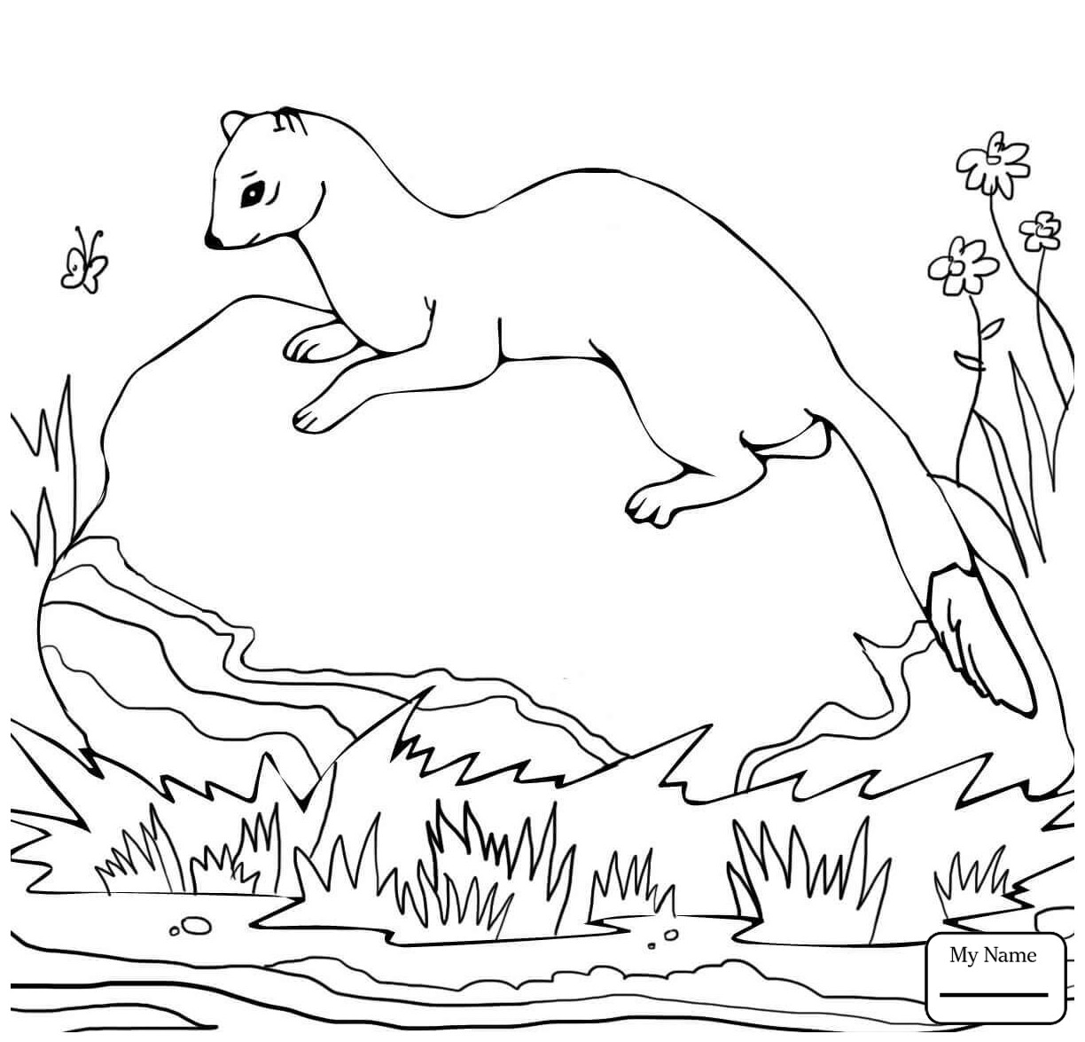 ferret coloring pages ferret coloring pages coloring pages to download and print coloring ferret pages