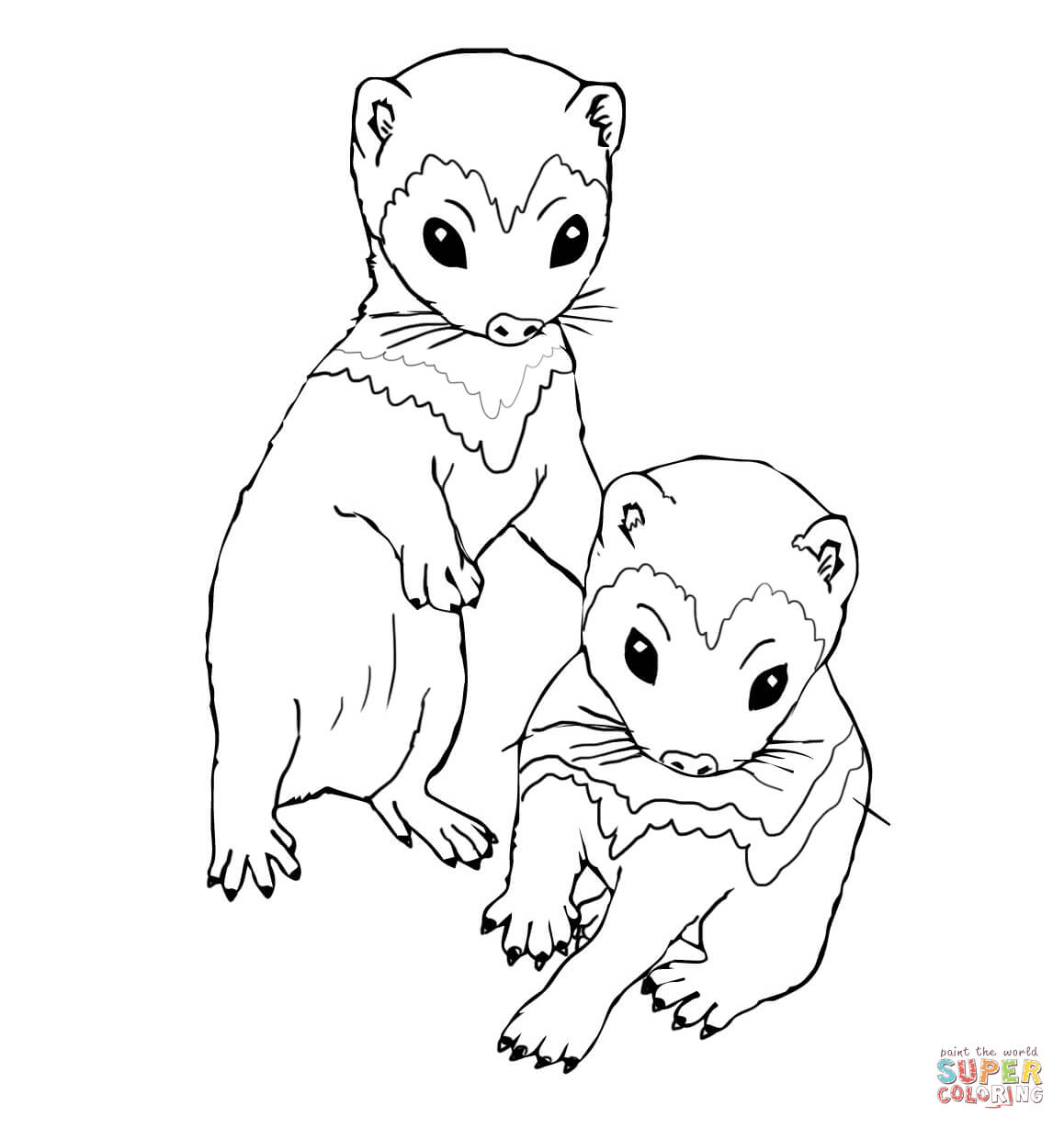 ferret coloring pages ferret coloring pages to print food ideas coloring pages ferret