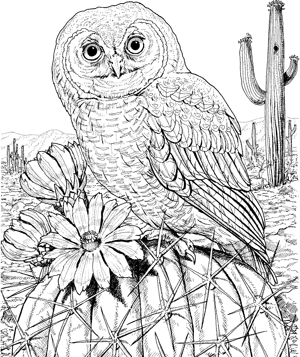 finished owl coloring pages abstract owl coloring pages at getcoloringscom free owl coloring finished pages
