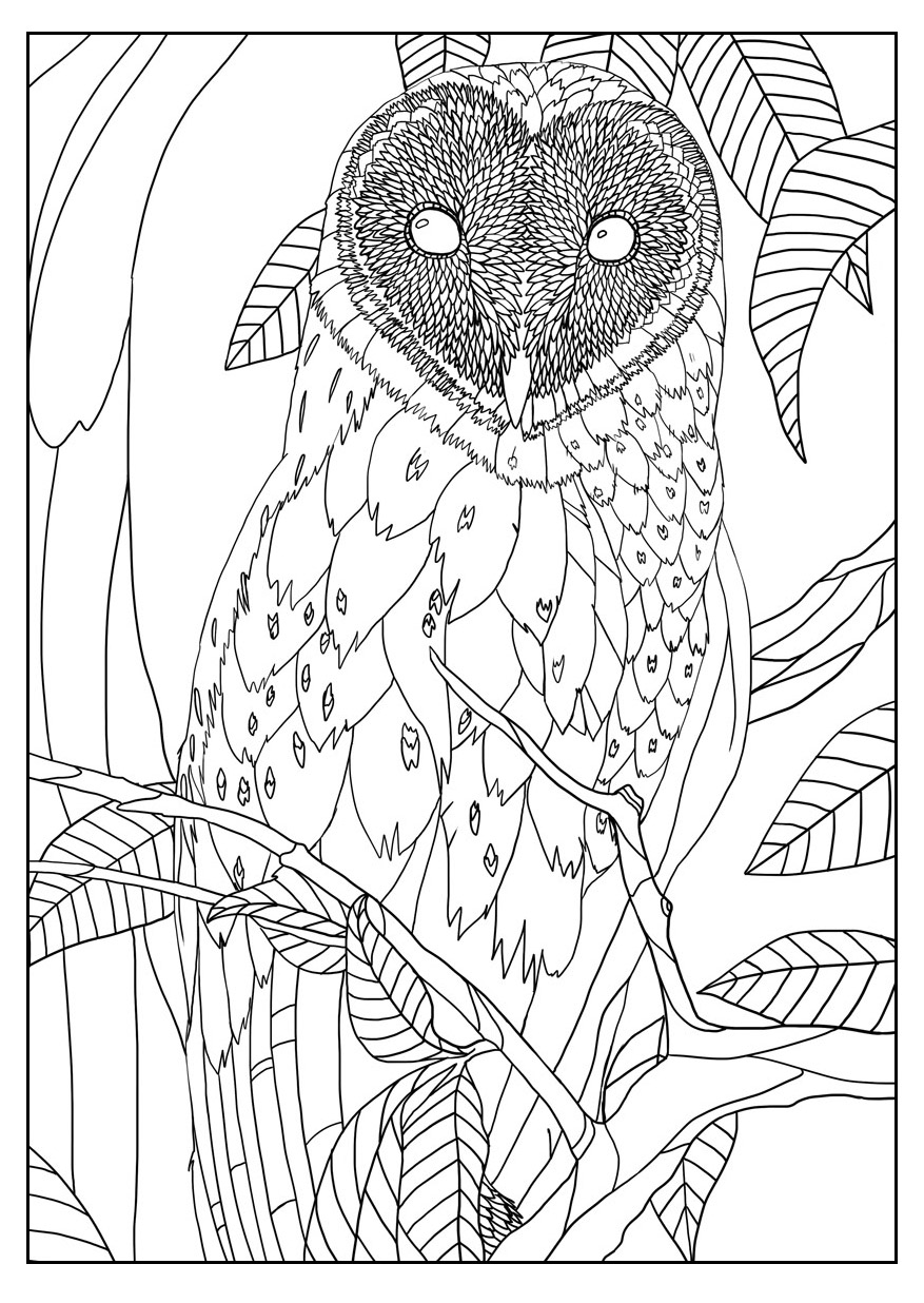finished owl coloring pages coloriage hibou 8590 animaux album de coloriages pages coloring owl finished