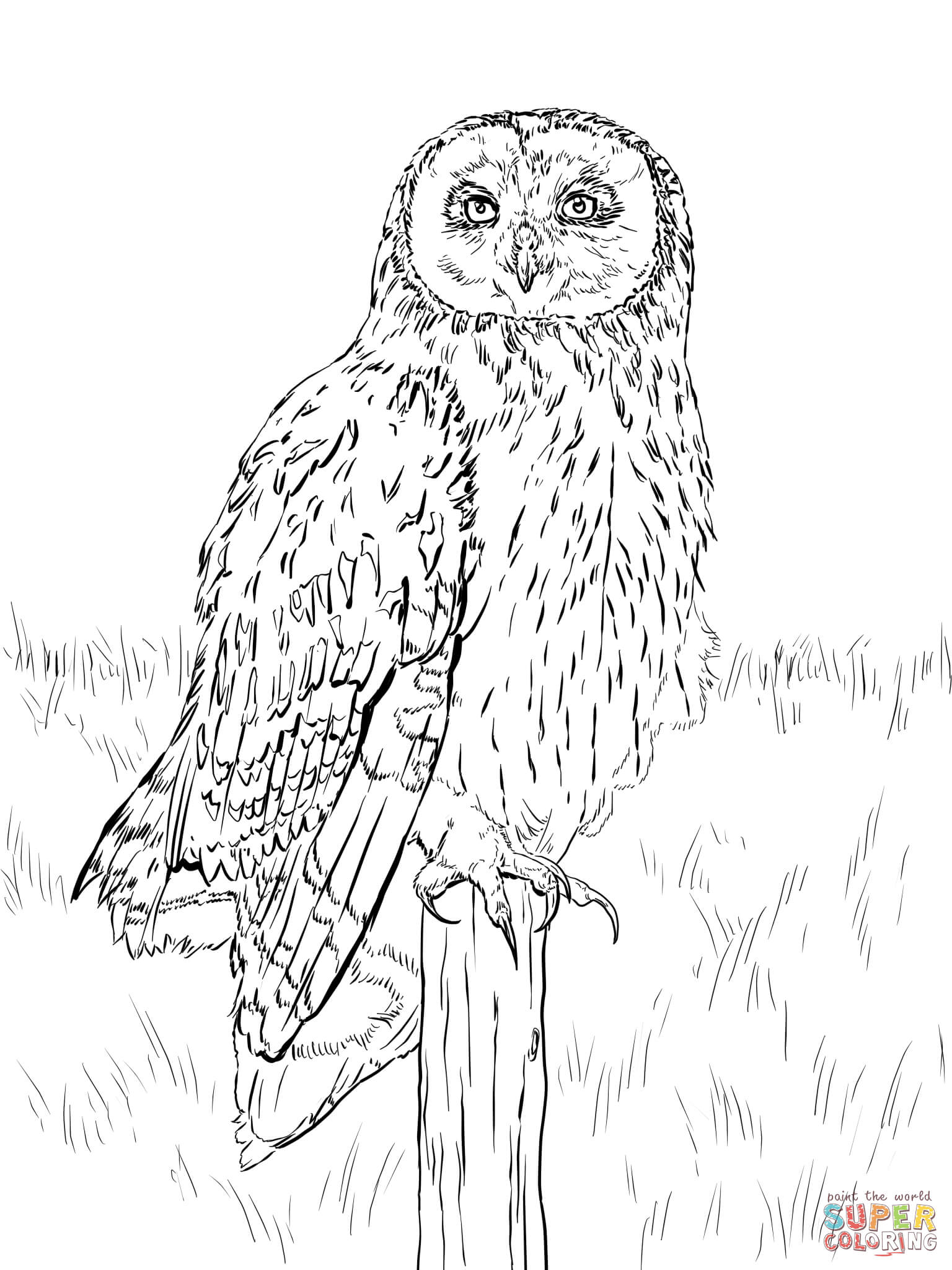 finished owl coloring pages owl coloring pages for adults free detailed owl coloring finished coloring pages owl